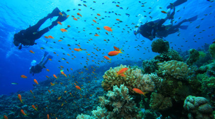 diving_south_africa