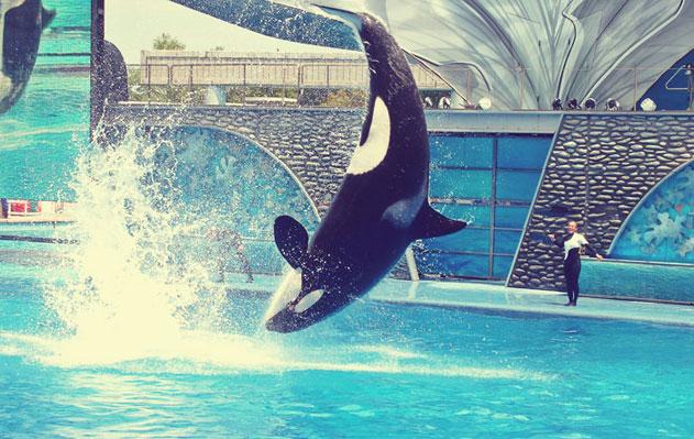 killer_whale_learn_english_631
